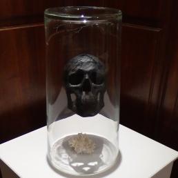 Crâne noir dans un grand verre, corail